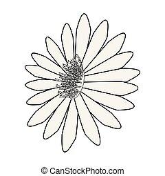 白い花, 背景, デイジー