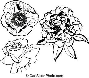 白い花, 背景, 隔離された, コレクション