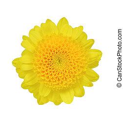 白い花, 隔離された, 黄色
