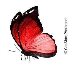 白い赤, 隔離された, 背景, 蝶