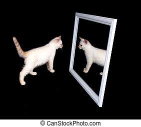 白人のキャット, 中に, a, 鏡