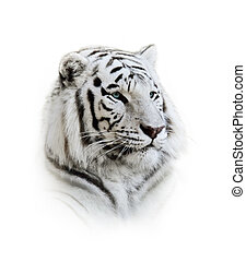 白的孟加拉虎, 肖像