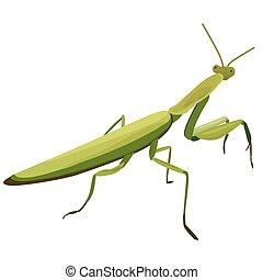 白的背景, 描述, 螳螂