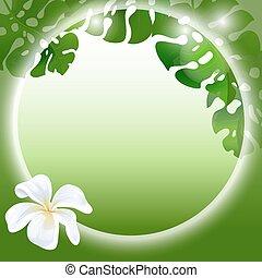 白色的花儿, 植物, 背景。