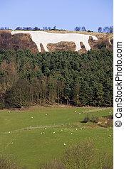 白色的馬, 在, kilburn, -, 約克郡, -, 英國
