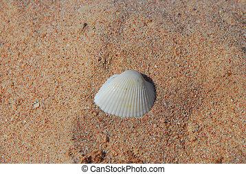 白色, 壳