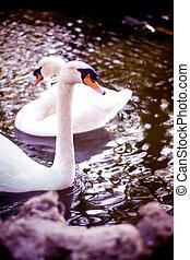 白色, 湖, 天鵝, 美麗