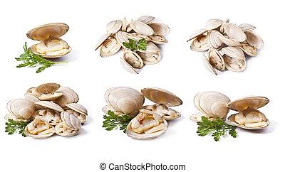 白色, 蛤, 集合, 被隔离, 背景