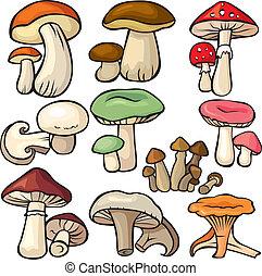 白色, 集合, 背景, 森林, 蘑菇