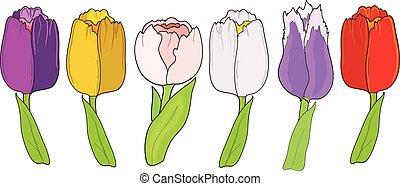 白色, 集合, 郁金香, 背景