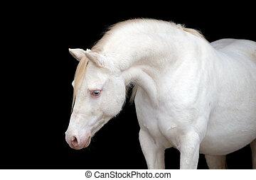 白色, 馬, 黑色, 頭