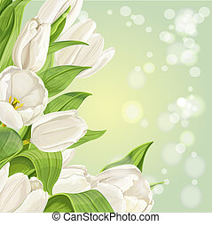 白色, 鬱金香, 在懷特上, 背景