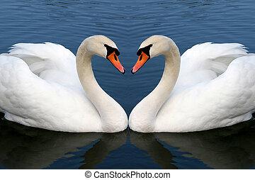 白鳥, 恋愛中である