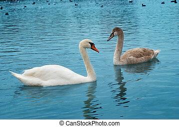白鳥, 2
