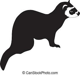 白鼬, 黑色半面畫像