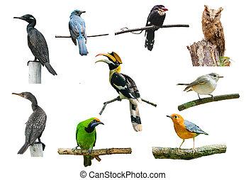 白, セット, 鳥, 背景
