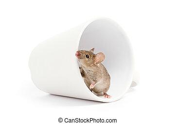 白, マウス, 隔離された, カップ