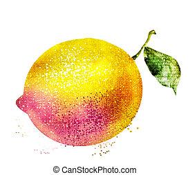 白, レモン, 水彩画