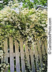 白, 低木, フェンス, 咲く