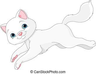 白, 子ネコ