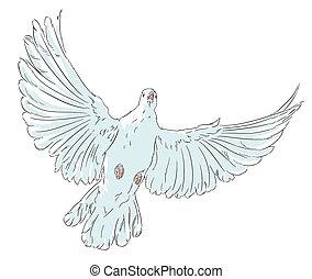 白, 平和, 鳩, 鳥