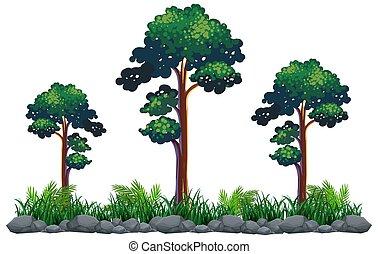 白, 木, 隔離された, 背景