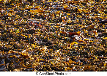 白, 海草, 積み重ね, 海, 湾