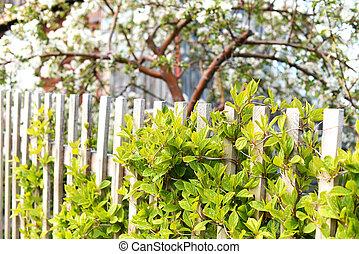 白, 花が咲いている株物