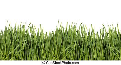 白, 草, 緑の背景