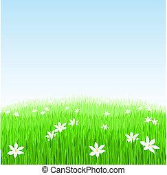 白, 草, 緑, 花