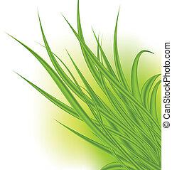 白, 草, 緑, 隔離された, 背景