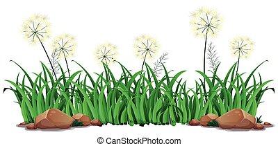 白, 草, 隔離された, 背景