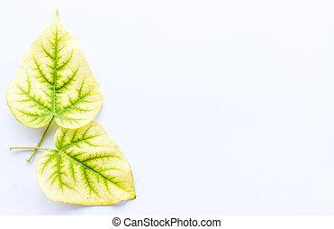 白, 葉, 黄色の背景