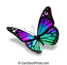 白, 蝶, 背景, 隔離された