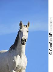 白, 馬, 空, 上に