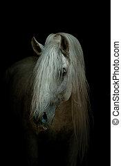 白, 黒い馬