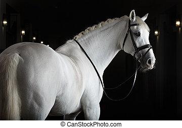 白, 黒い馬, 背景
