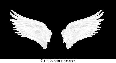 白, 黒い鳥, 背景, 翼