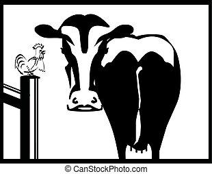 白, 黒, 牛, おんどり