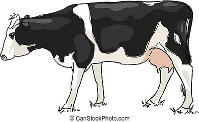 白, 黒, 牛, 牧草を食べる