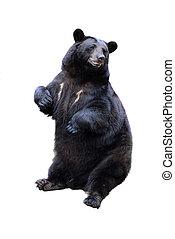 白, 黒, 隔離された, 熊