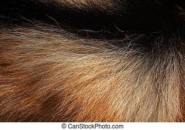 白, 黒, horsehair
