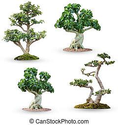 盆景, 剪下的资料, 放置, 树, 隔离, 背景, 白色, path.