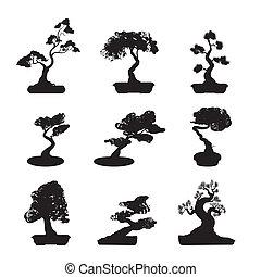 盆景, 樹, 黑色半面畫像, 集合