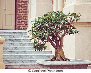 盆栽, ポット, 木, 丈夫
