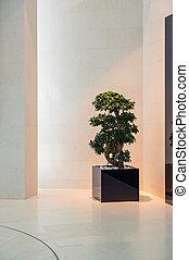 盆栽, 中に, ∥, 現代, 内部