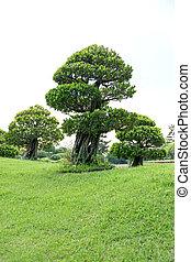 盆栽, 中に, ∥, garden.