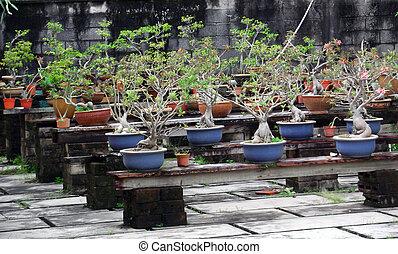 盆栽, 庭