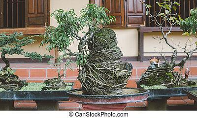盆栽, 美しい, 芸術, 木, ミニチュア, asia.