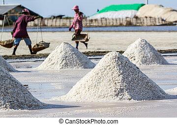 盐, 收获, fields., 农夫